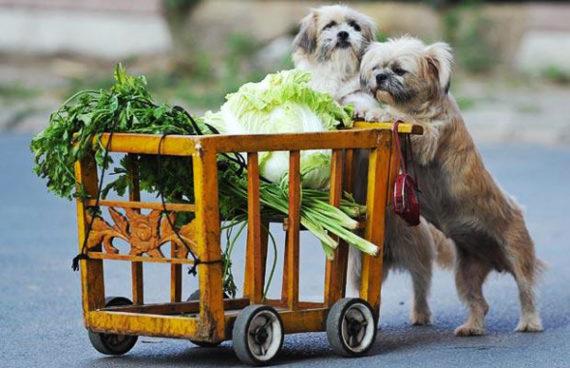 Franchising Animali: alimenti a domicilio